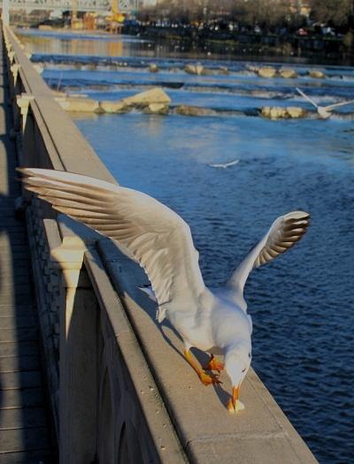 в нашем порту чайки ловили хлеб на лету