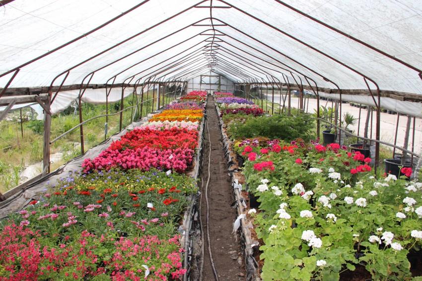 Питомники рассады и растений 333