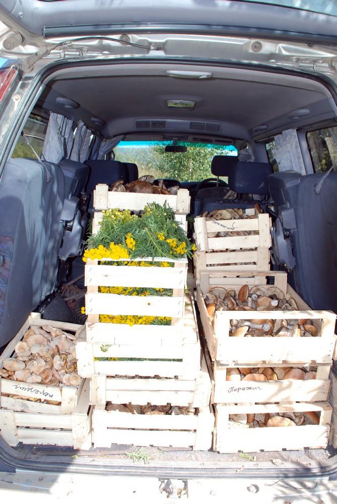 грибы, перевозка