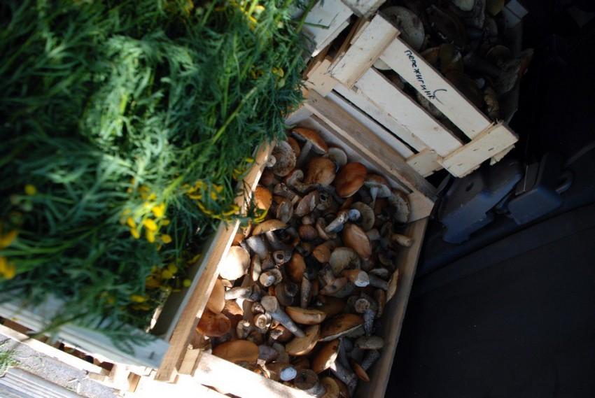 перевозка грибов