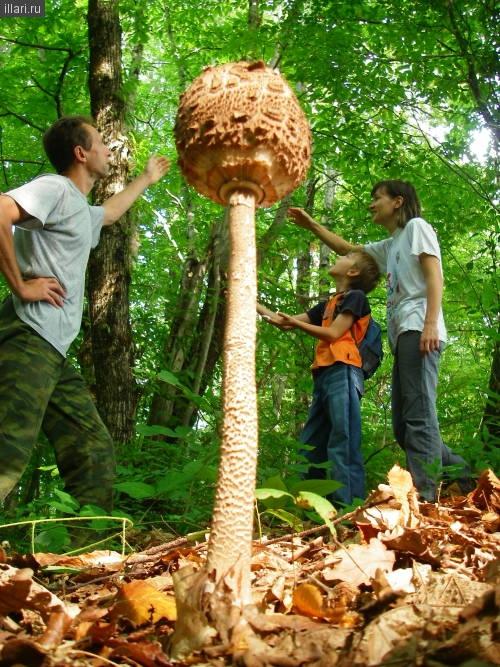 В Сочи самые большие грибы!