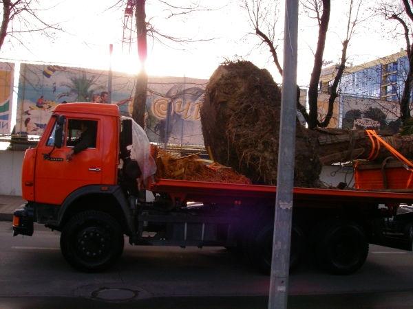 пальма на грузовике