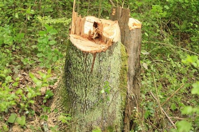 Вырубка леса в Сочи