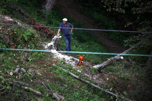 В Сочи рубят лес