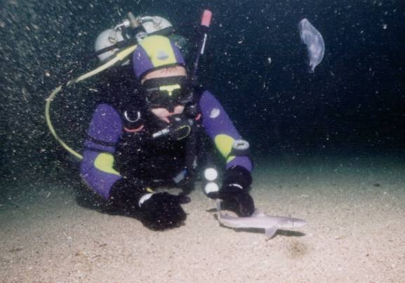 Катран иногда может достигать 2 метров, а кошачья акула больше метра...