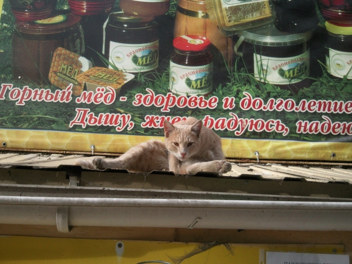 """Ещё один котяра- с улицы Роз. На крыше """"Ярославны""""."""