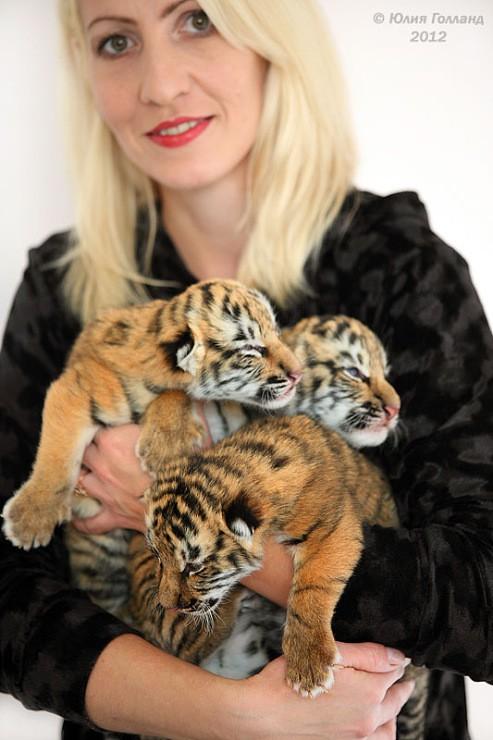 Тигрята приёмыши в Сочи 45d975ec81