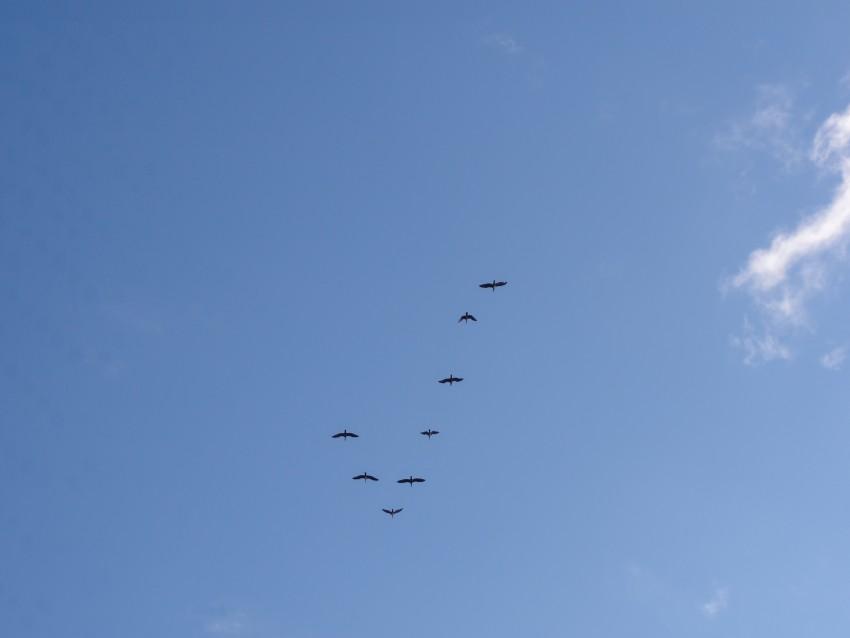 птицы в сочи фото