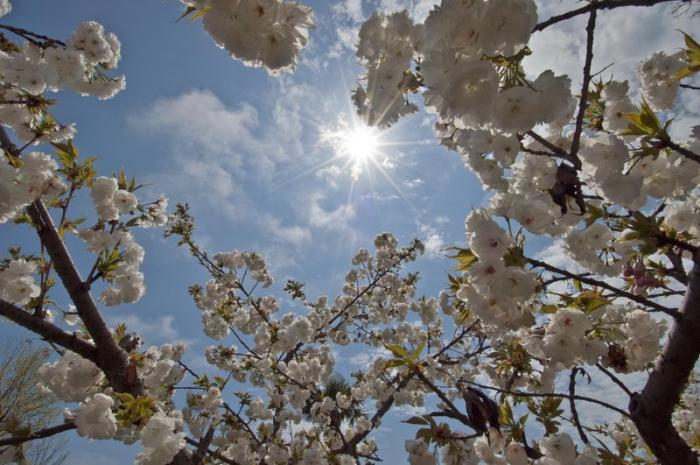 аллергия на весну у ребенка симптомы