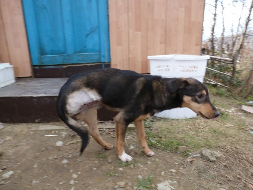 Ветеринарные клиники в Сочи