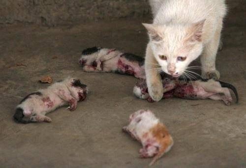свищ фото у кошки