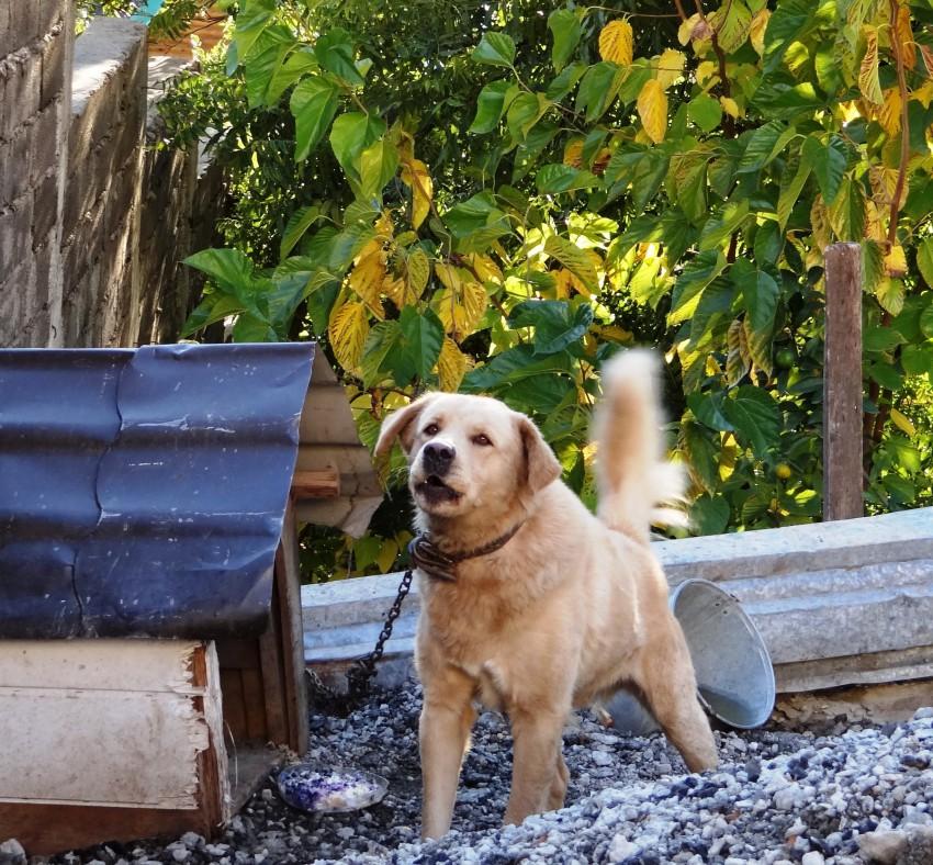 Заявление об укусе собаки участковому образец