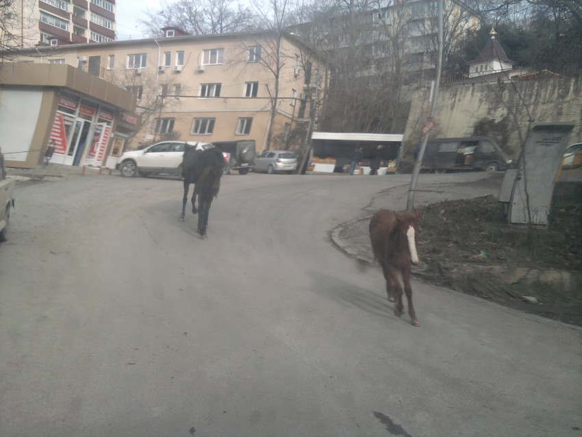 новые игры кони