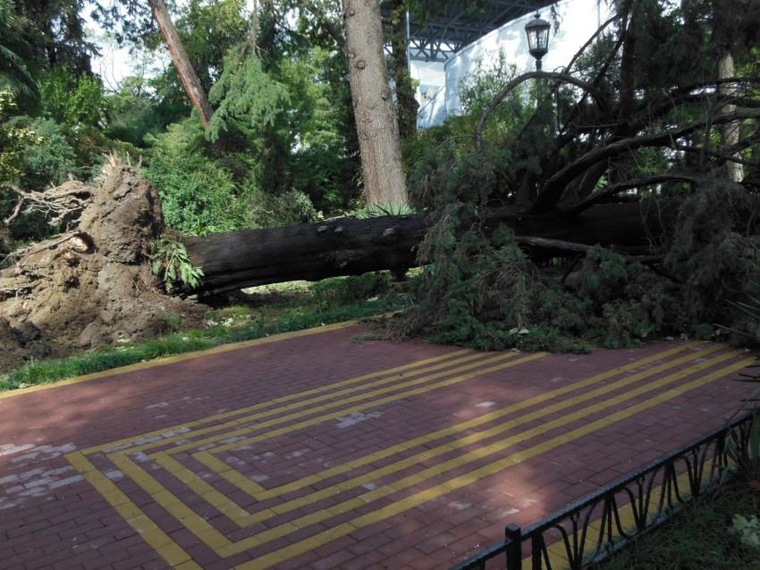 ураган в городе Сочи