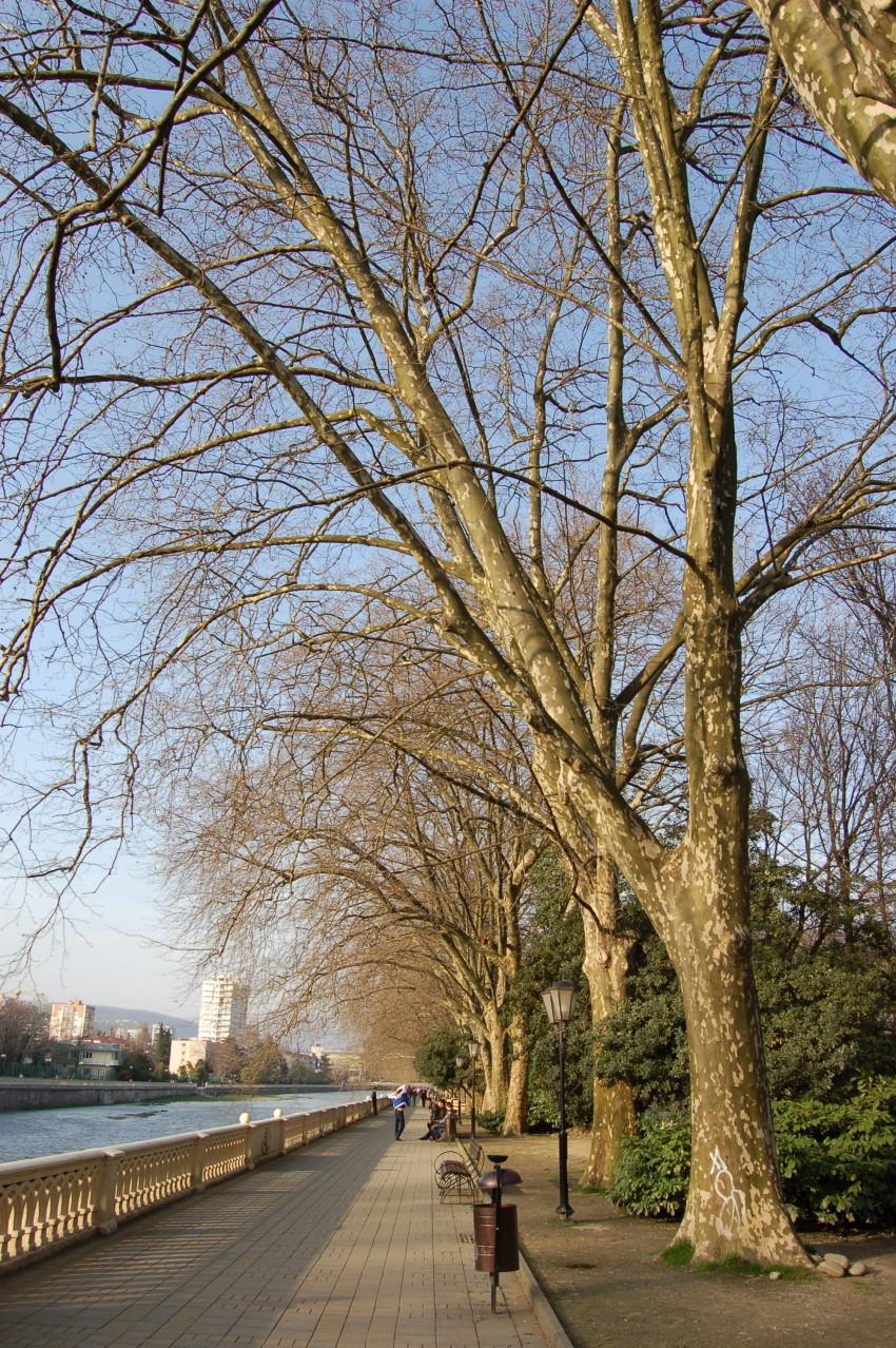 Это  - знаменитая платановая аллея вдоль реки. Последний оплот зелени