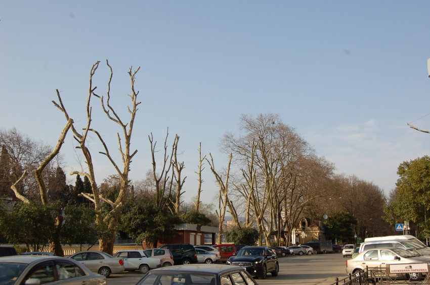 На следующем для обруба дереве гнездо какой-то птицы