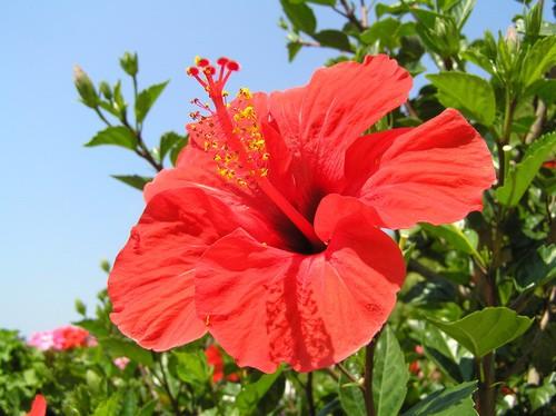 цветущие кустарники крыма фото и названия
