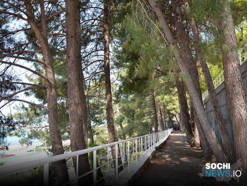 На верхней приморской набережной в Сочи остановлена вырубка реликтовых сосен