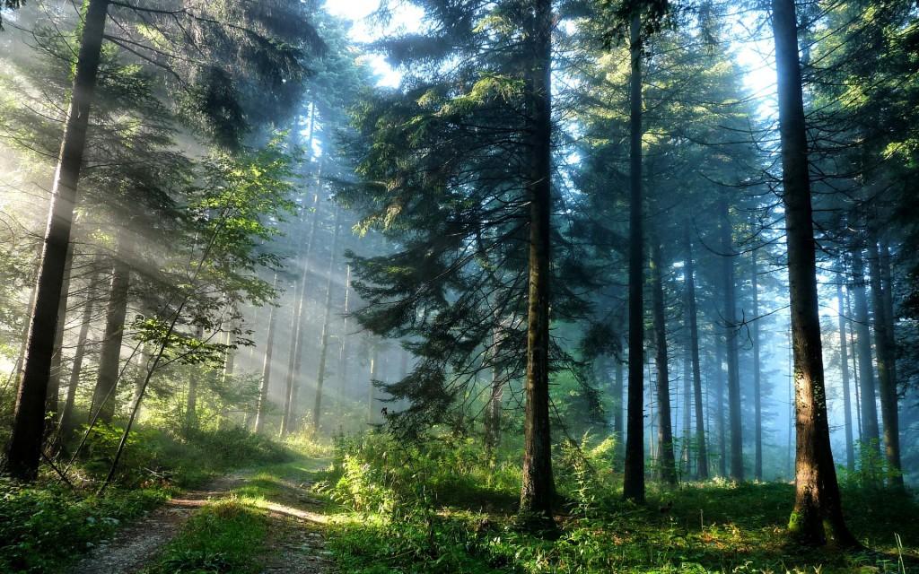 Усиление мер по патрулированию лесов Сочинского национального парка
