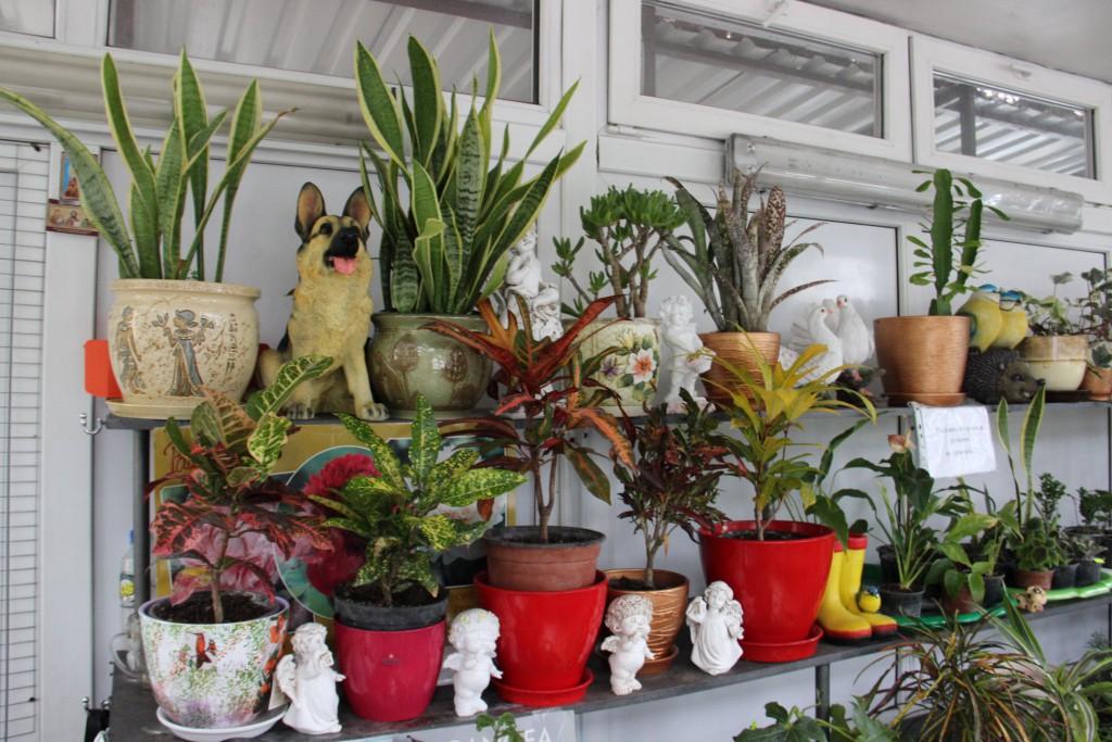 В цветочном магазине парка Дендрарий новые коллекции растений