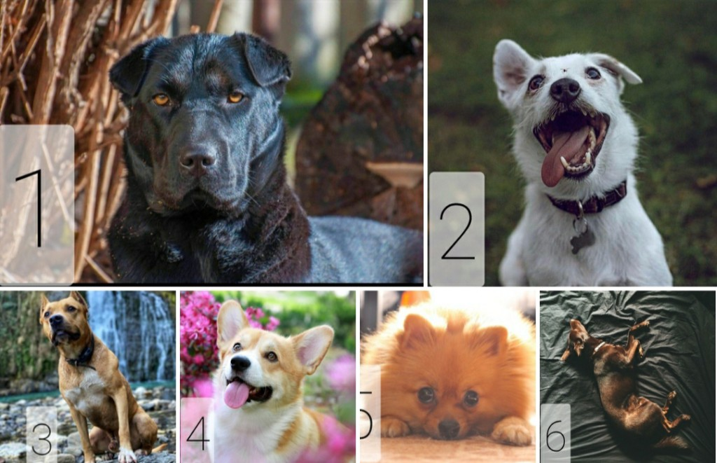 Голосуй за лучшее фото собаки, победителю 30 кг корма Karmy!