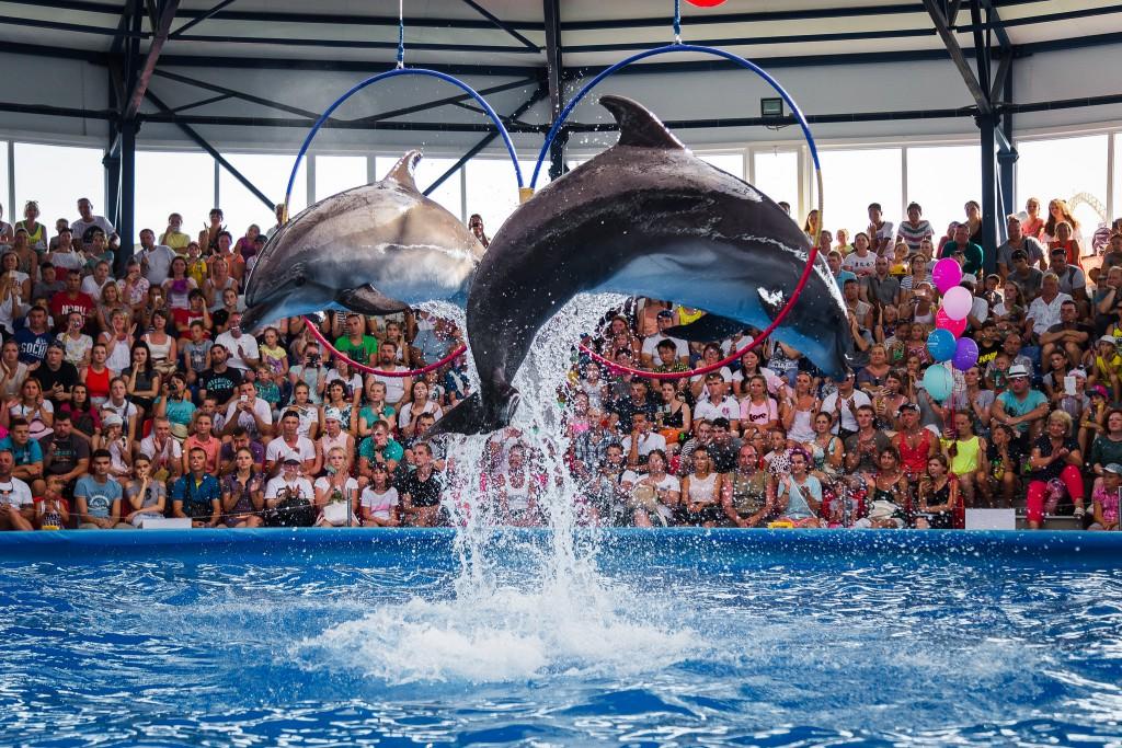 В Сочи Парке открылся дельфинарий