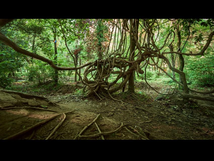 Дерево в парке в Н.Афоне