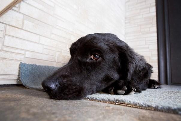 Лучшие ветеринарные клиники Сочи, рейтинг