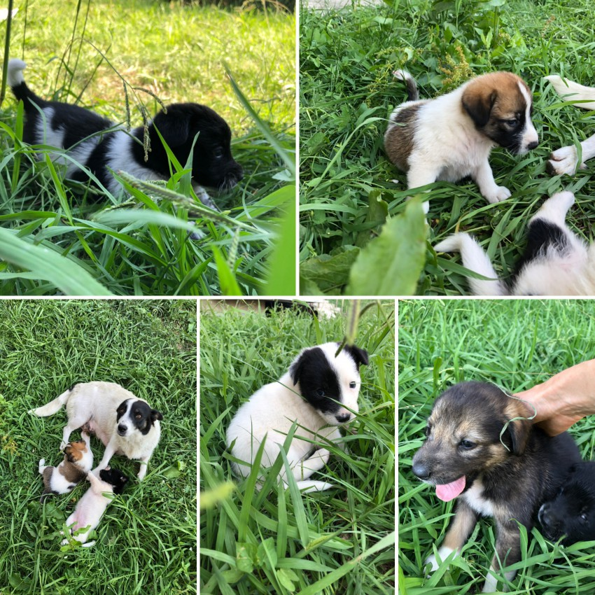 Вот такое семейство, мама и пятеро щенков.