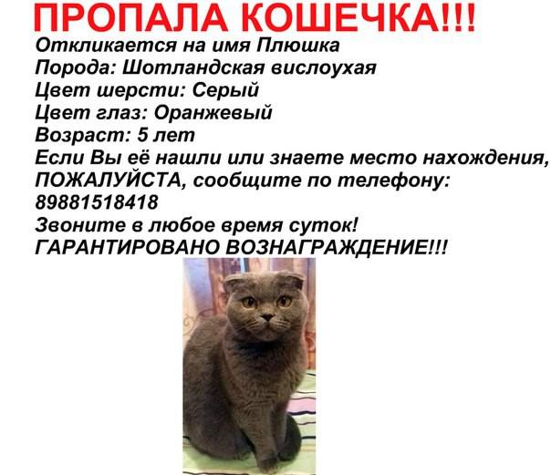 Объявление потеря кота