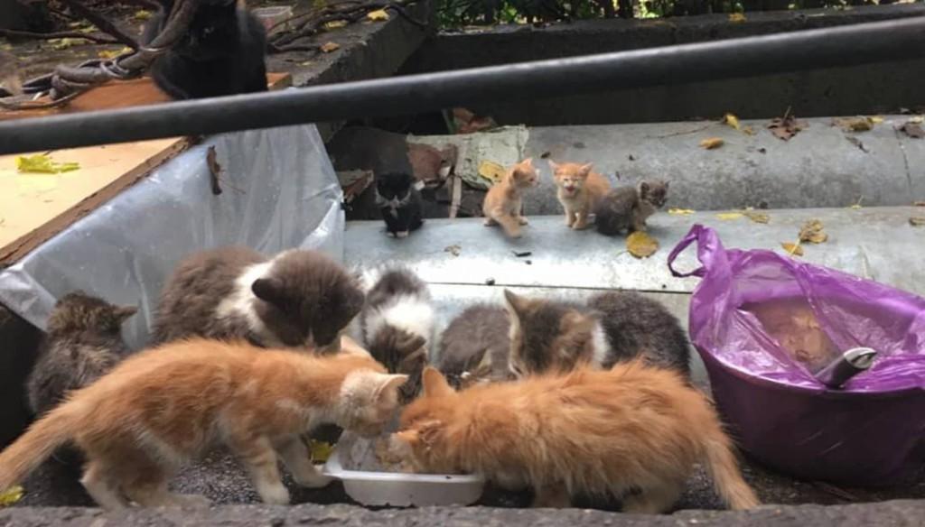 Бездомные животные Сочи, Бездомные котята