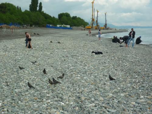 Пляжи адлера фото частный сектор