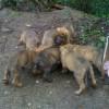 Помогите спасти щенят!!!