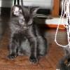 Очаровательные котята ищут дом!