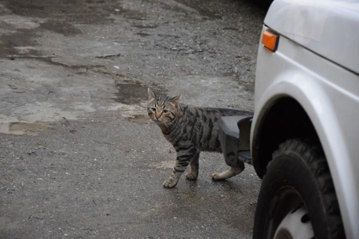 пропал член семьи (кот)