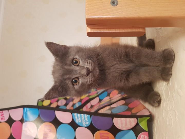 Ласковые, игривые котята срочно ищут дом!