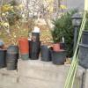 Некое количество садовой тары