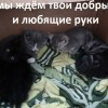Антистресс! Котята даром!
