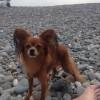 Пропал пёсик в районе набережной Морпорта