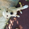 щенок ищет хозяина