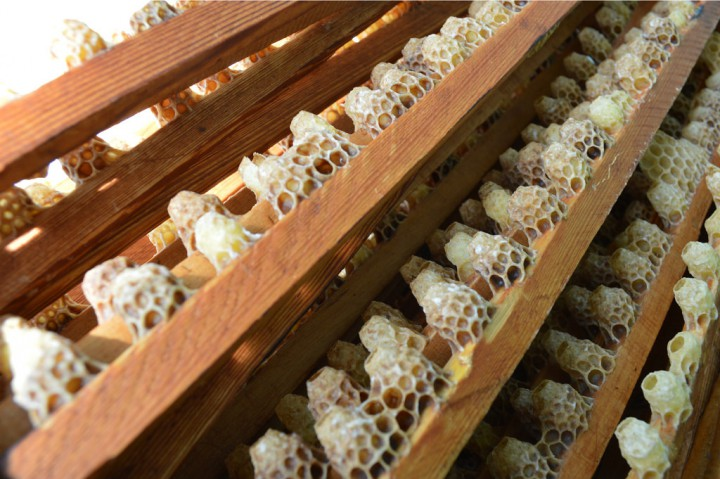 Пчелиное маточное молочко с высокогорного села Аибга.