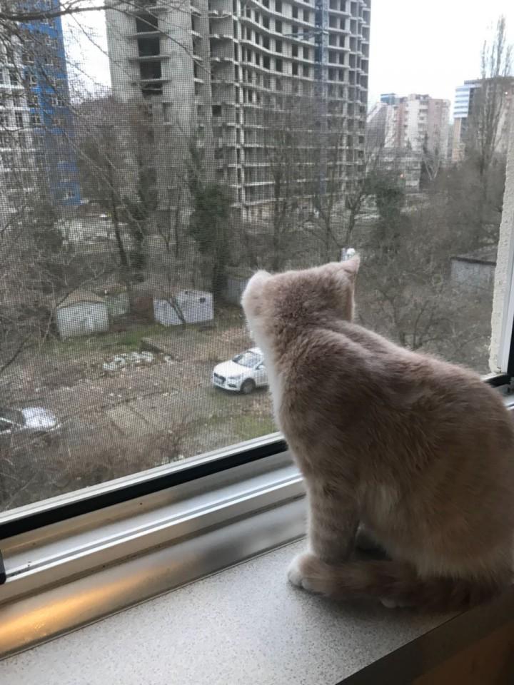 Пропал кот !!