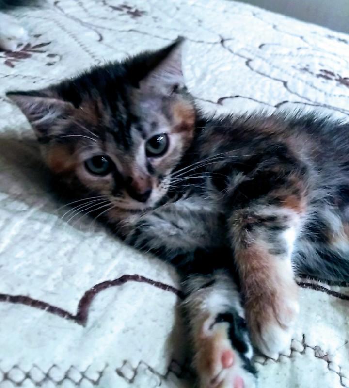 Милых котят в добрый дом
