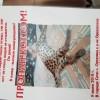 Пропал леопардовый кот
