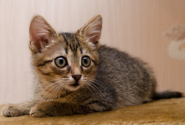 Ищет дом котенок