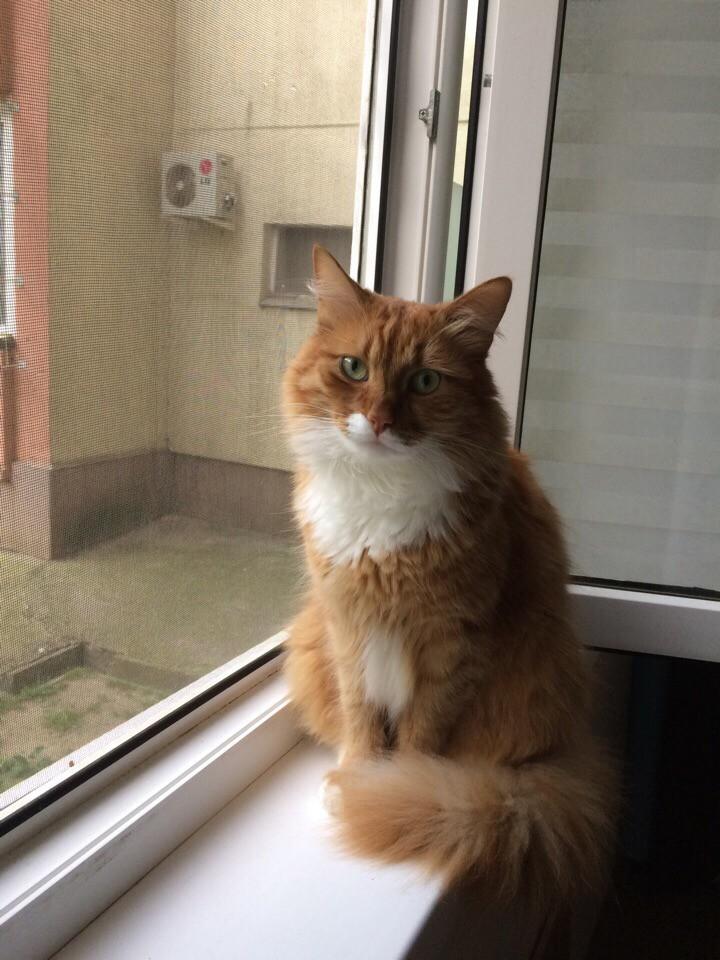 Пропал кот. Дагомыс