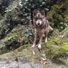 Найден пес. Змейковские водопады.