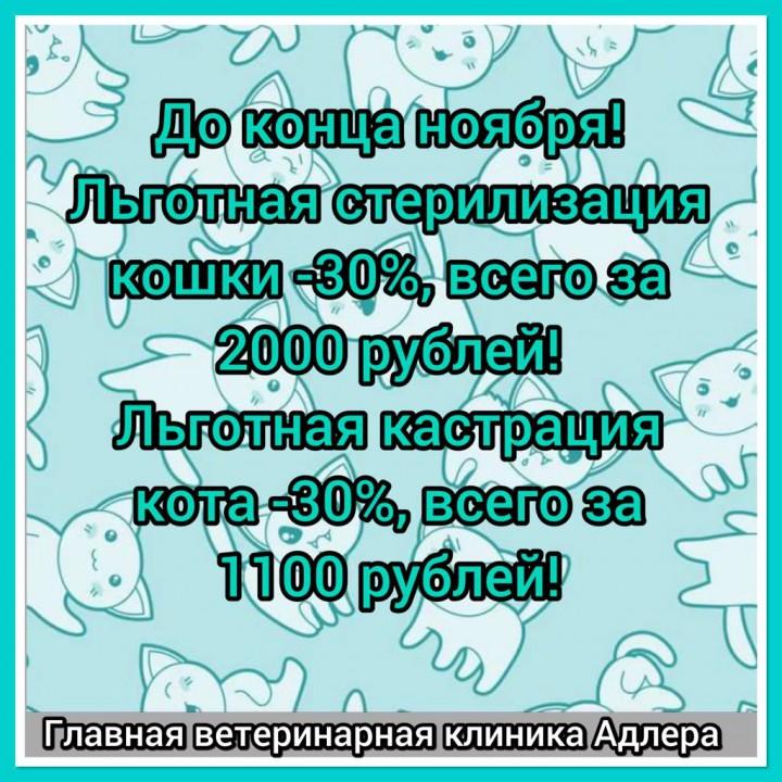 Акция! До конца ноября льготная стерилизация и кастрация кошек и