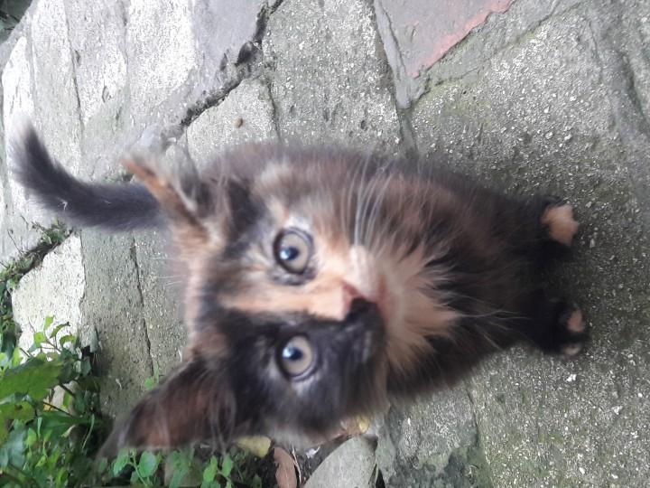 Подарите котятам дом