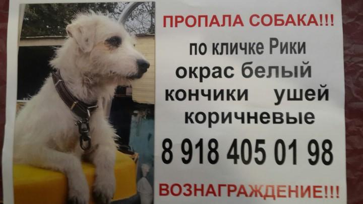 В Адлере пропала собака